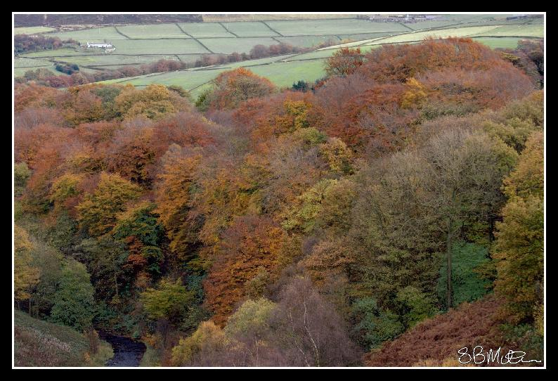 Trees in Autumn: Photograph by Steve Milner